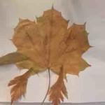 Herbstbild 10