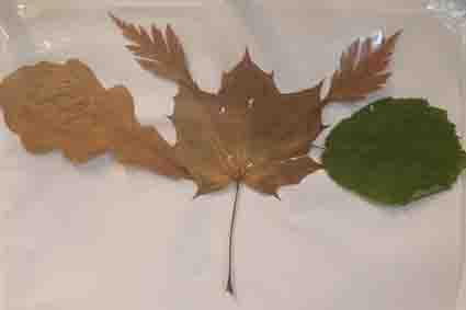 Herbstbild 9